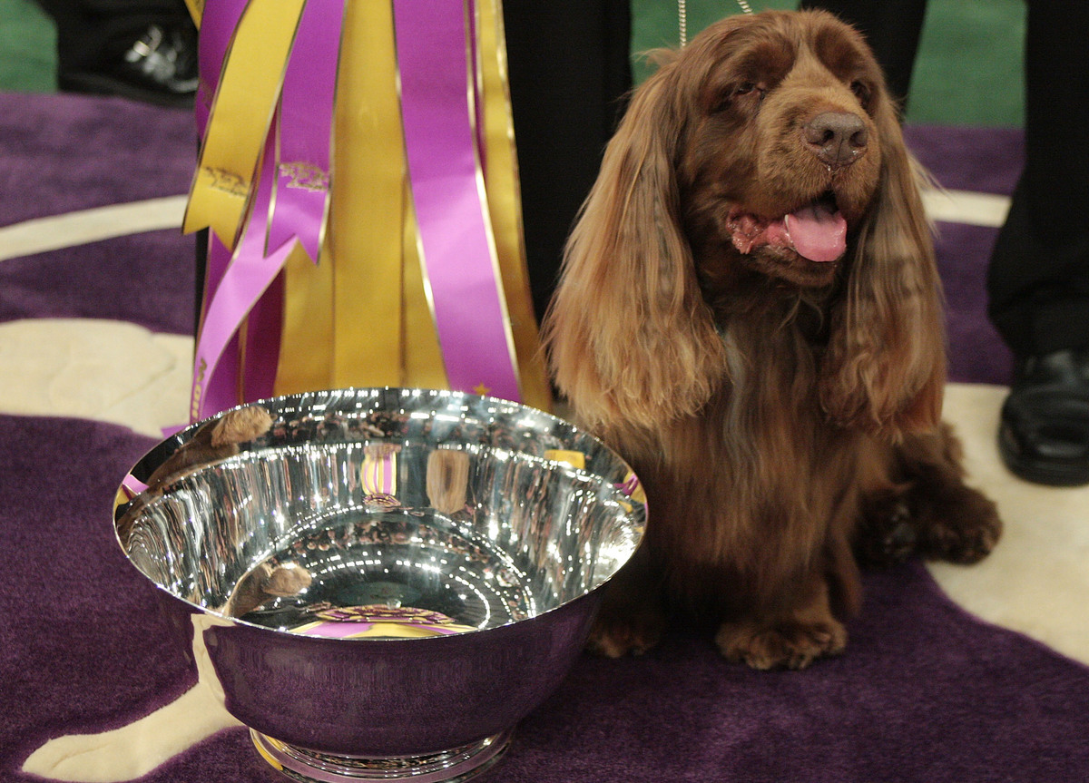 A Sussex Spaniel won the 133rd Annual Westminster Kennel Club Dog Show.