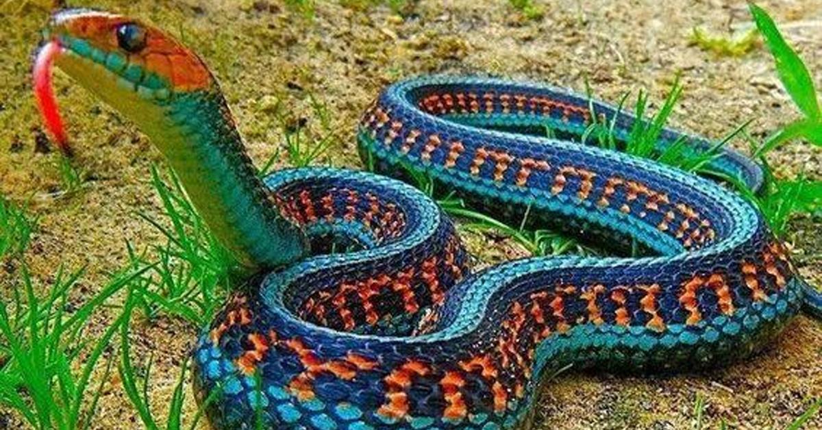 ring necked dangerous snake