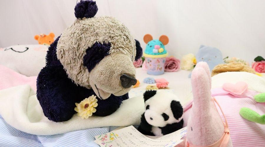 panda bear recovering