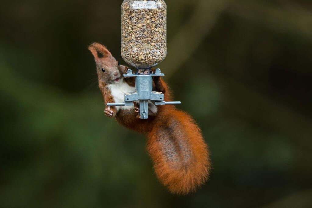 squirrel-feeder-88288