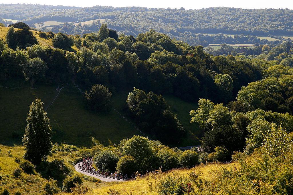Trees fill a hillside in Surrey.