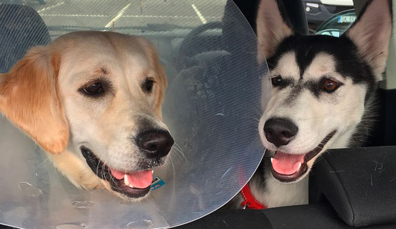 Skylar sits next to Lola, who is wearing a cone.