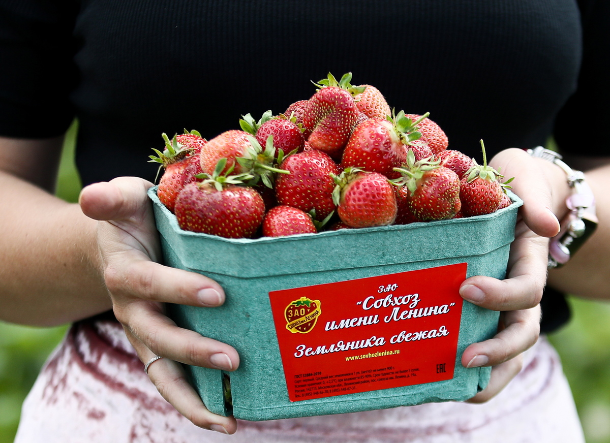 A woman holds fresh-picked strawberries in a tin.