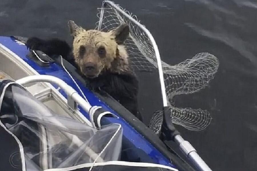 bear-almost-in-boat-89120-50897