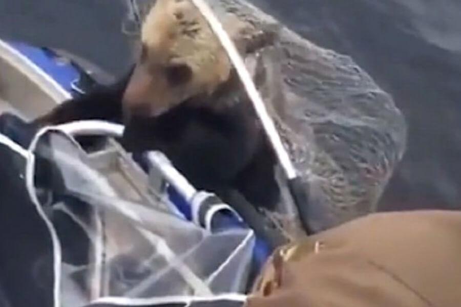bear-in-net-18507-76790