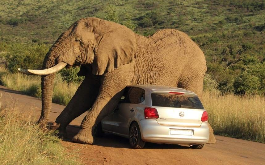 elephant-on-top-of-car