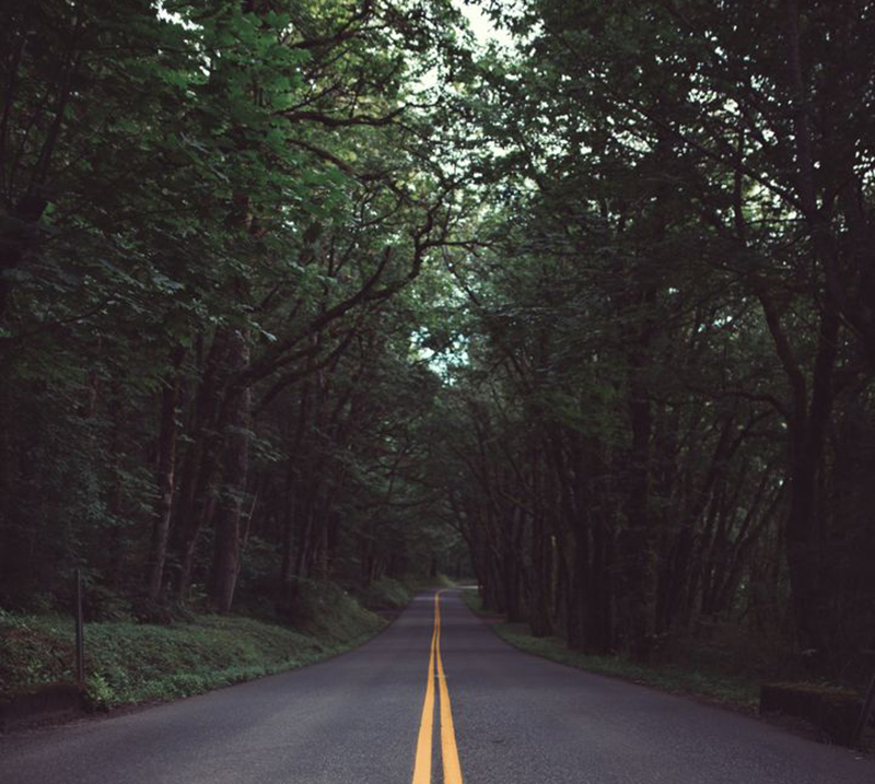 road-under-trees