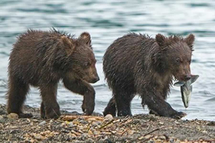 young-bears-alive-30812-73436
