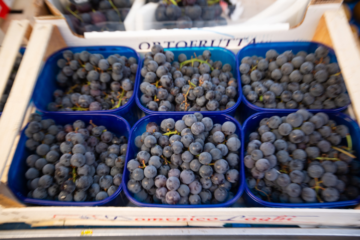 Six containers of blueberries sit in a cardboard box.