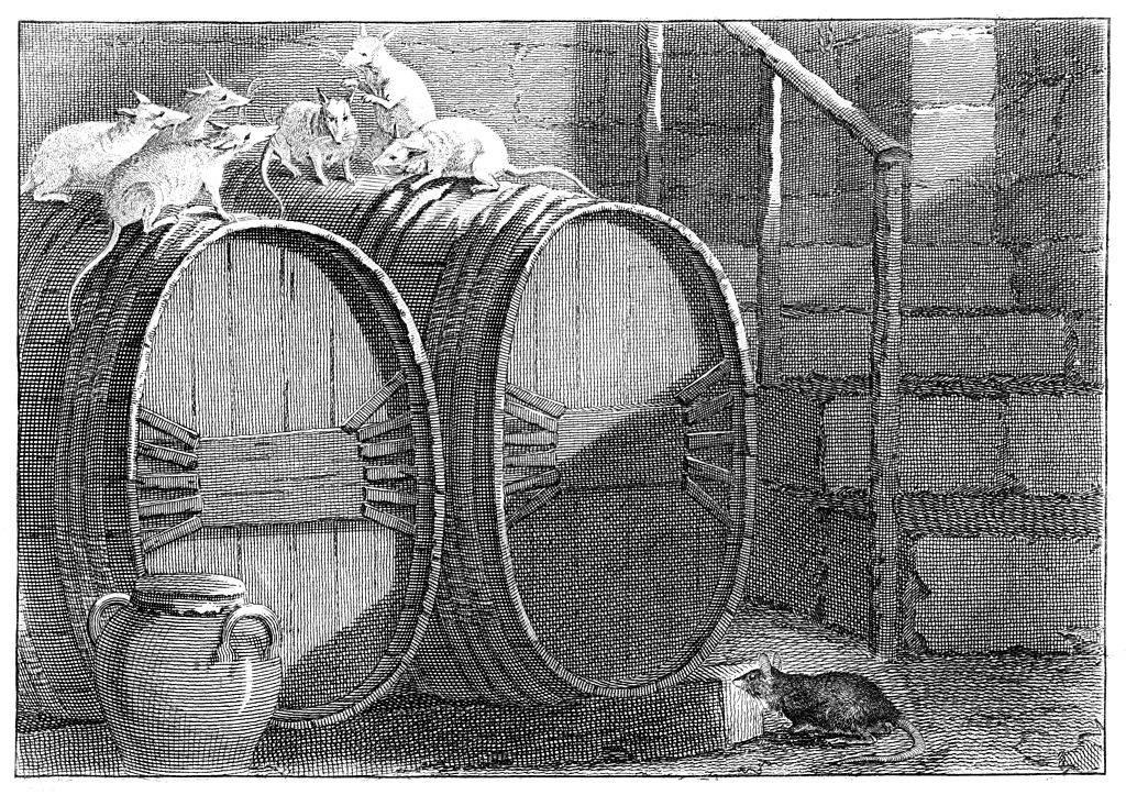 Rats on a barrel