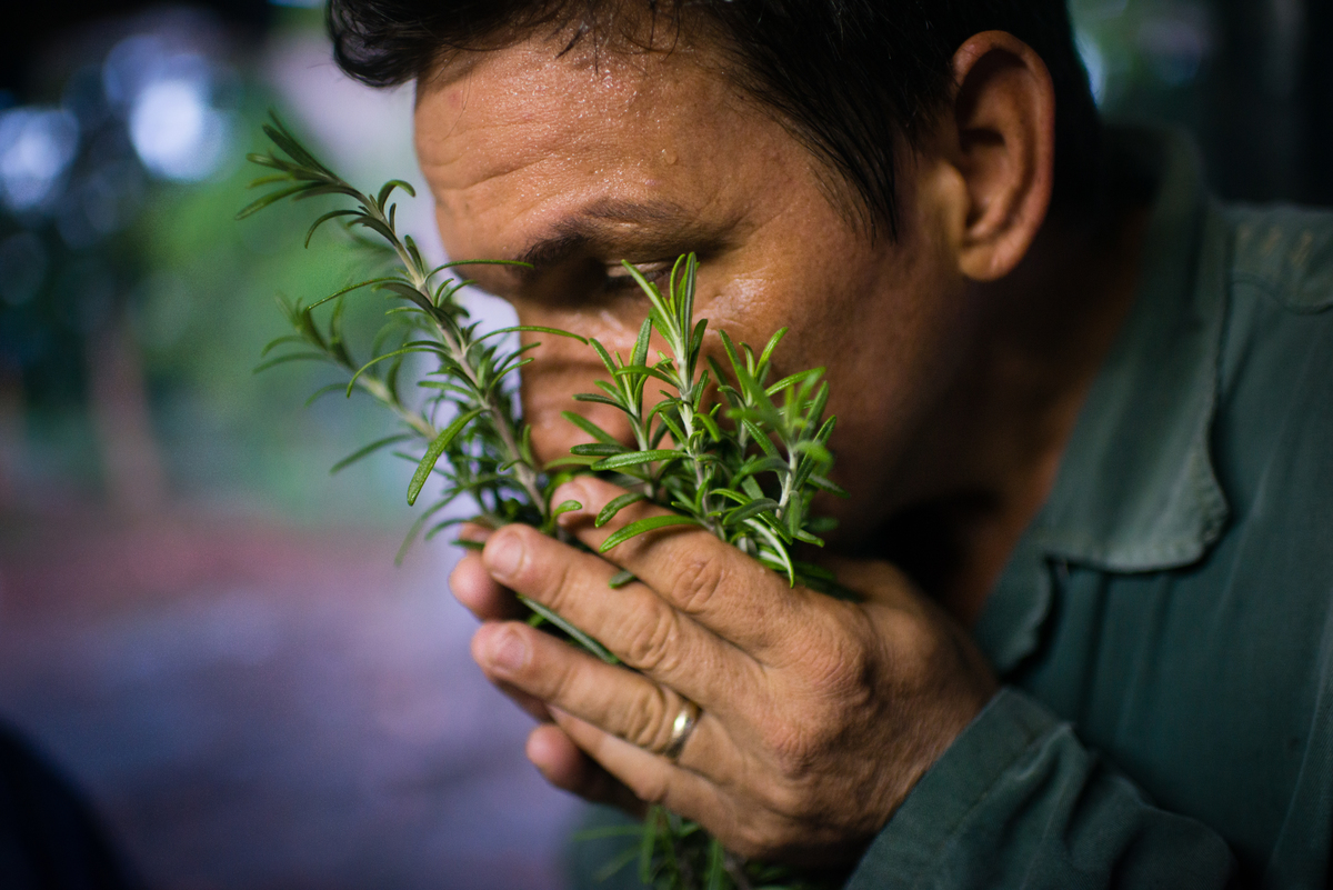 A man smells several sprigs of rosemary.