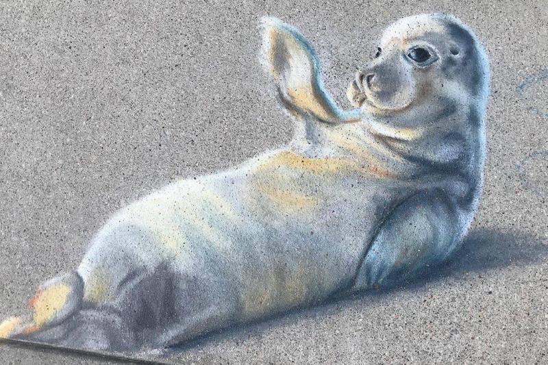 seal chalk