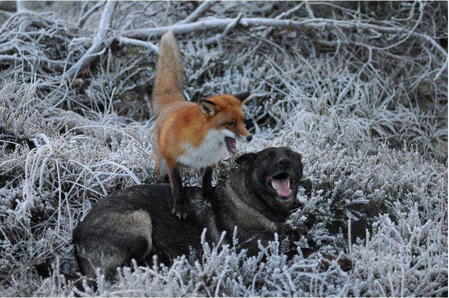 Sniffer And Tinni Are Still Friends Today
