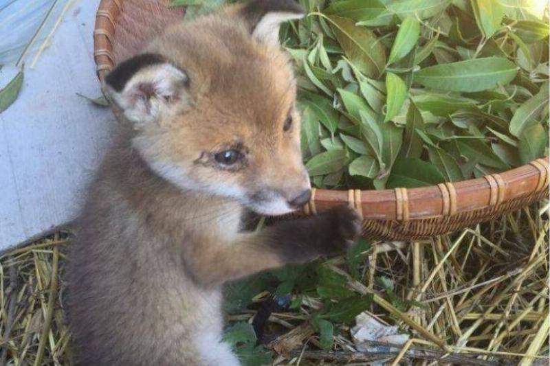 What Happened To A Lucky Baby Fox