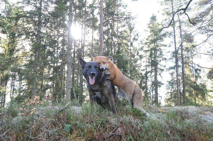 Willa And Izzy Aren't The Only Fox-Hound Pair
