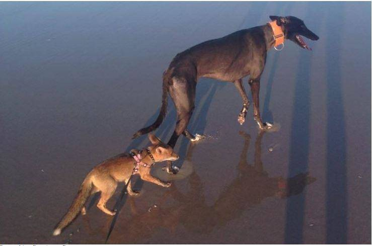 Willa-and-Izzy-walking-along-the-beach-in-Australia.jpg-72993