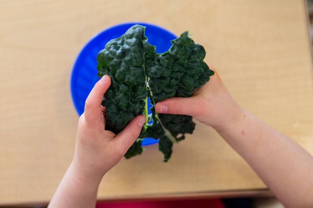child holding a piece of kale over a blue bowl