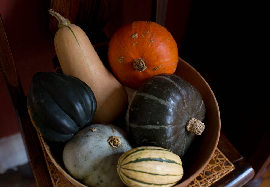 A mixed bowl of fall squashes, including buttercup, acorn, hubbard, butternut and delicata