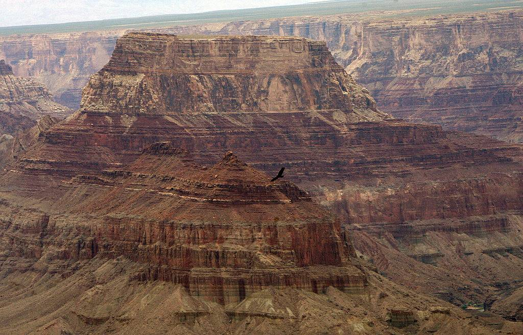 Eagle flying over the Grand Canyon