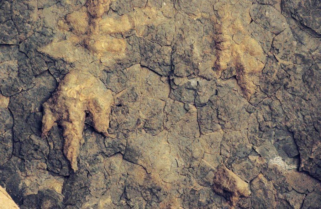Reptile footprints
