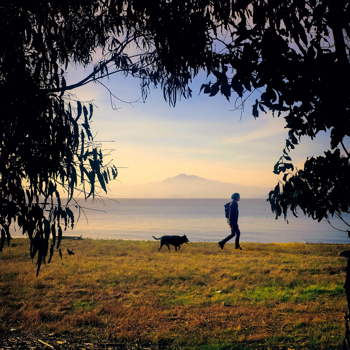 View of a hiker with a dog near the shore at Point Pinole Regional Shoreline, California, 2017. Visible in the distance, across San Francisco Bay, is the peak of Mount Tamalpais above the fog.