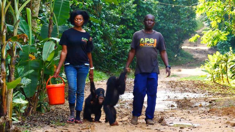 man and woman holding hands with monkeys in ape action africa shirts