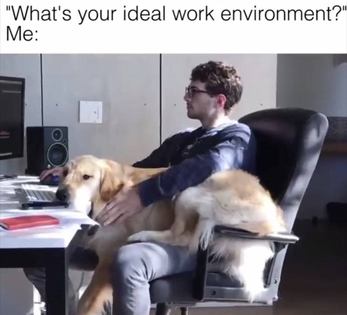 A dog lies on a man's lap while he works at his desk.