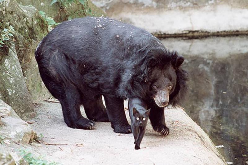 bear7-41598
