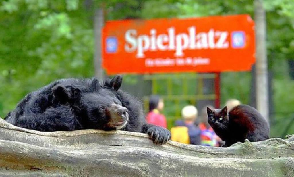 cat-in-bear-enclosure-11-90969