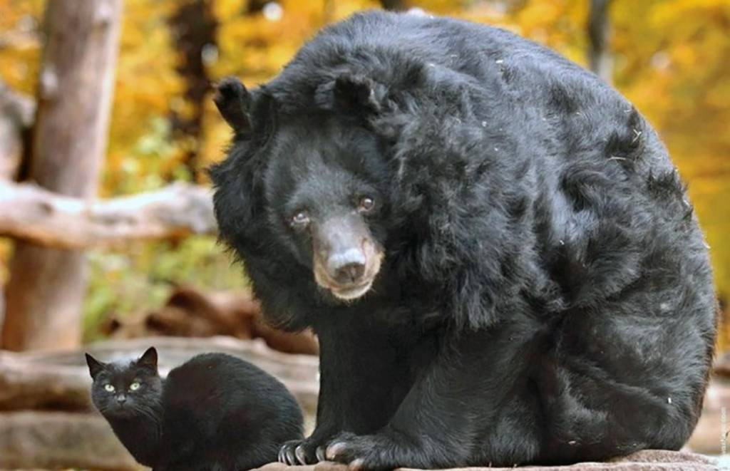 cat-in-bear-enclosure-13-47636