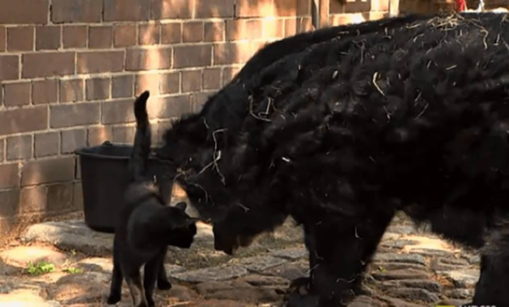 cat-in-bear-enclosure-14-93017