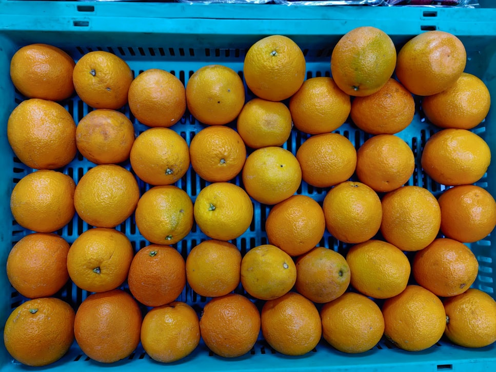 A blue plastic crate is filled with oranges.