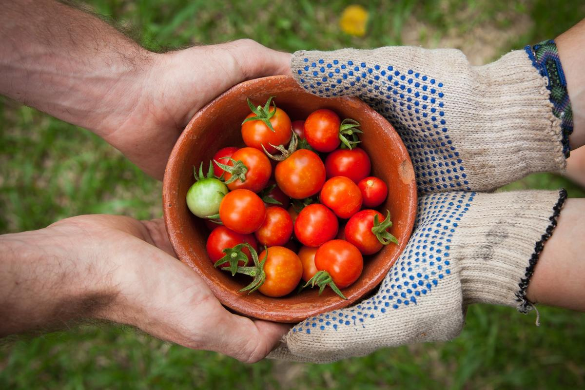 Two people hold a bowl of miniature tomatoes.
