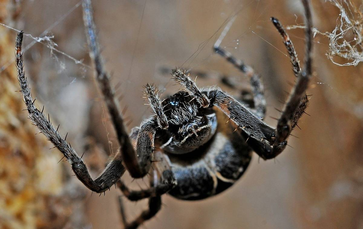 It Was Time To Learn About The UK's Spiders
