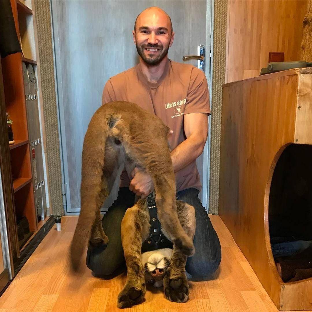 puma-housecat-flipped-upside-down-88645