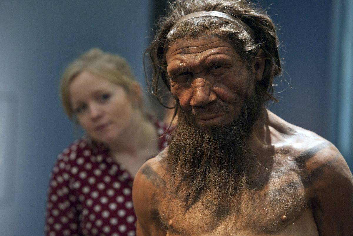 An employee of the Natural History Museum in London looks at model of a Neanderthal male.