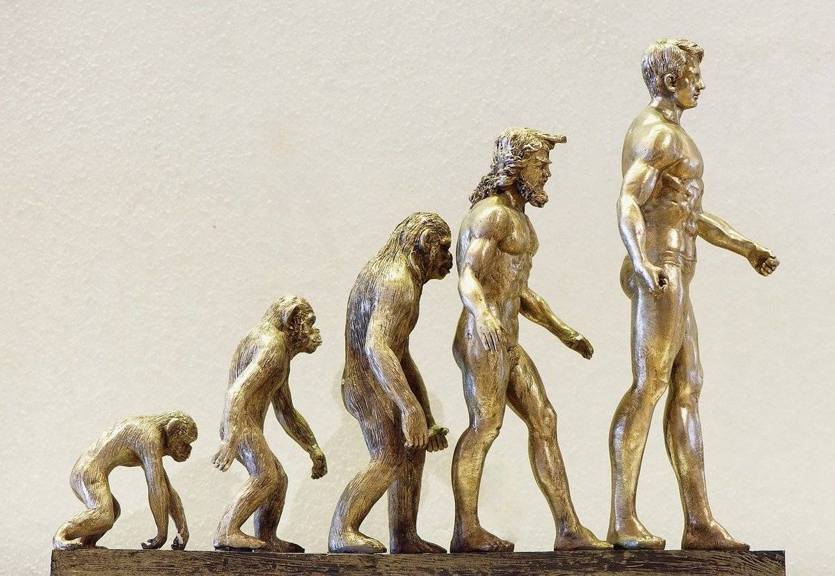 A metal model shows the steps in human evolution.