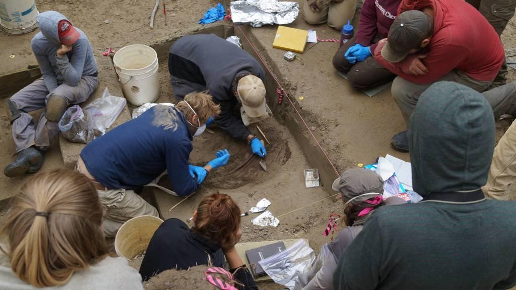 Potter and his team excavate bones.